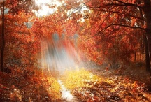 The Beauty of Autumn / Have always loved the Fall, ever since I was a child. Its beauty, its smell, its feel !  / by Gaye Marie