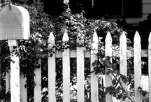 Picket Fences / by Gaye Marie