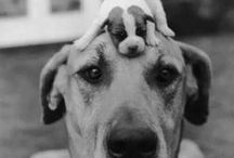 BA50s LOVE Their Pets! / Photos, pictures and quotes about all animals people keep as pets-dogs, cats, rabbits, birds, etc.