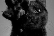 Creepy Kitties <3