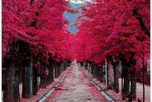 Blush and Bashful / Pinks / by Kelly Yale