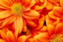 Orange Crush / by Kelly Yale