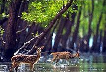 India Wildlife / Explore the Real Wildlife of India with Incredible Images & Videos. For more log on to IndiaWildlifeResorts.com