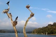 Bird Watching in Munnar, Kerala / Bird Watching in Munnar, Kerala,Photos By Gayatri Hazarika