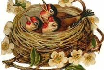 Birdie Darling