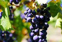 Vineyards / by Betty Butler