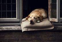 dog / by Megan S.
