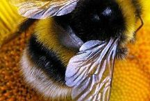Bees / Examples of bees