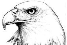 --birds--