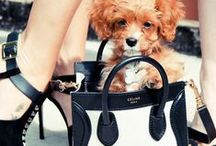 """#Luxury fashion accessories!  / """"Luxury bags make your life more pleasant, make you dream, give you confidence, and show your neighbors you are doing well."""" — Karl Lagerfeld / by Maya :)"""
