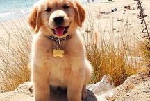 ~ puppies ~
