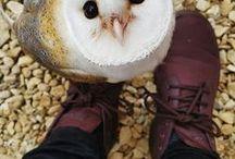 Owls, shhh / Big eyeeeees