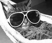 Hiburan Lucu | Funny | Cat