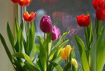 Bitki çiçek