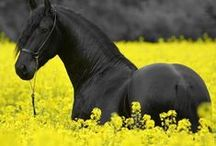 Horses / Everybody has an animal they love!
