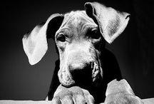 FAVOURITE - Animals