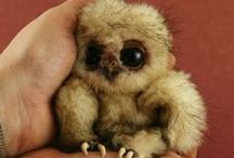 Cuteness / Things that are just far too cute not to pin.