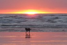 FAVOURITE- Best place on earth....HOME Invercargill, Southland