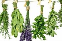 kruiden / Tijdens onze dagbesteding verwerken we kruiden en bloemen tot buitenleven producten zoals handcreme, lipbalsems en kruidenthee