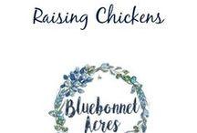 Raising Chickens / Raising Chickens
