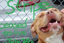 Urgent Dogs and Cats, Needing Homes and some Love.  / by Gail Strejc