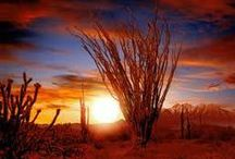 Arizona / by ❤️Ruth Parker❤️