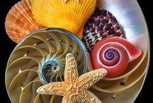 She Sells Seashells / sand and shells and ocean waves