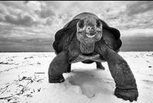 Holden's turtles