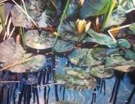 David Kessler / Painting on Metal. Realistic and Holographic.  ||  Waterscapes on metal, refracted light, photorealism, modern, contemporary, contemplative