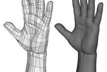 Human - Hand and Arm