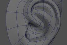 Human - Ear
