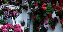 Flores de amor  Suzana / Flores e seus perfumes .