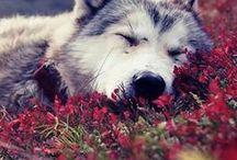 ~animals~ / Cute Animals