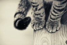 Meow :3 / cats - puuur