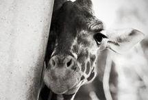 Animals / by Chantal Skraba