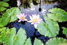 Heathcote Botanical Gardens / Images from Heathcote Botanical Gardens.
