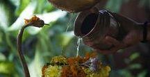 Indien - eine spirituelle Reise / Michael Boyny hat sich auf eine Reise durch das spirituelle Indien gemacht. Er besuchte heilige Tempelzeremonien, Opferrituale und farbenfrohe Feste.