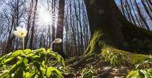 Trees - Bäume / Eichen, Buchen, Tannen, Birken und jede Menge Natur. Unsere Fotografen waren für Sie im Wald unterwegs und haben Flora und Fauna festgehalten.