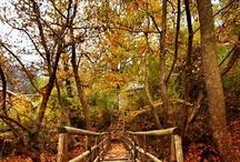 Autumn / Pumpkins, leaves, cool air, apples...I LOVE AUTUMN! / by Aleah