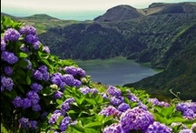 Azores / The most beautiful place in the world.