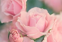 Flowers:*・゚☆.Roses.:*・゚☆Flowers :) / by Chiaki Fujita