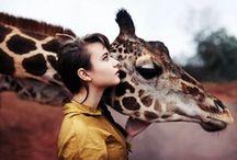 Giraffes :-)