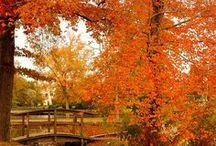 fall. / by Elizabeth Fortier