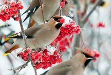 Oiseaux, birds
