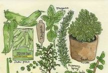 HUNGRY for herbs / by Lou H