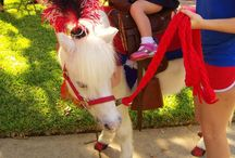 Animal party, petting zoos, pony rides/Texas based / Texas petting zoo and Texas pony ride party vendors. Parties, Corporate Events, Carnivals- petting zoos and pony themes state-wide; Texas Vendors