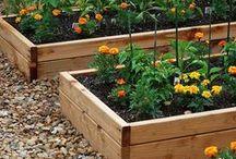 Gardening / by Simply Organized