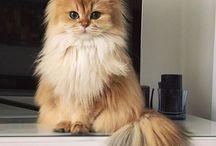 Cats / Cuteness