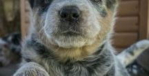Cani: Razze preferite