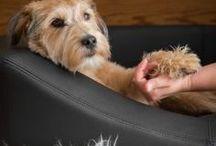 Impressionen wohnen mit Hund